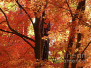 Fall Colors Autumn Colors Posters - Autumn Leaves Poster by Carol Groenen