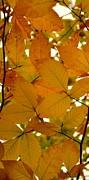 Corinne Rhode - Autumn Leaves