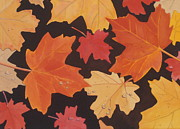Fallen Leaf Painting Posters - Autumn Leaves Poster by Elaine Jones