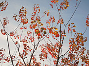 Red Leaves Art - Autumn Leaves by Emilee Pendl