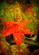 Western Canada Landscape Art Posters - Autumn Leaves Poster by Jordan Blackstone
