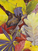 Birdseye Pastels Metal Prints - Autumn Leaves Metal Print by Nick Payne