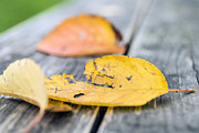 Autumn Photos Originals - Autumn leaves of Edo garden 1 by Ponte Ryuurui