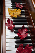 Red Leaf Posters - Autumn leaves on piano Poster by Garry Gay