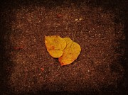 Photos Of Autumn Metal Prints - Autumn Leaves On The Ground Metal Print by Lauren Figueroa