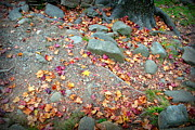 Gatlinburg Tennessee Prints - Autumn Leaves Print by Sara Whaley
