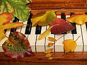 Ivory Rose Prints - Autumn Leaves Tickle the Ivories Print by Anna Lisa Yoder