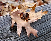 Todd Soderstrom - Autumn Leaves with Acorn...