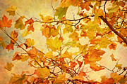 Autumn Photos Digital Art Prints - Autumn Leaves with Texture Effect Print by Natalie Kinnear