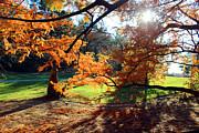 Carolyn Stagger Cokley - Autumn Leaves0874