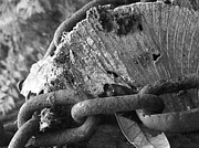 Jeff Mantz Rhodes - Autumn Log B/W