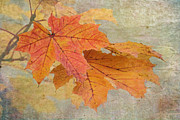Changing Colors Prints - Autumn Maple Print by Angie Vogel