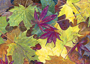 Birdseye Painting Posters - Autumn Maple Leaves Poster by Nick Payne
