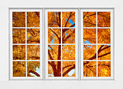 Picture Window Frame Photos Art - Autumn Maple Tree View Through A White Picture Window Frame by James Bo Insogna