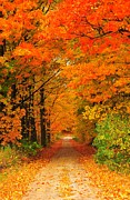 Country Road Posters - Autumn Marmalade Poster by Terri Gostola