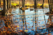 Autumn Landscape Photo Metal Prints - Autumn Marsh Metal Print by Bill  Wakeley