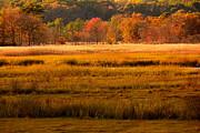 Raymond Salani III - Autumn Marsh