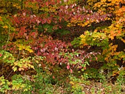 Photos Of Autumn Prints - Autumn Mix Print by Gene Cyr