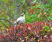Autumn Art Posters - Autumn Mockingbird Poster by Torie Tiffany