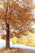 Karol  Livote - Autumn Moment