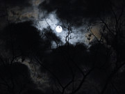 Moonlit Night Prints - Autumn Moon 2 Print by Christine Perry