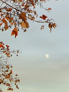 Guy Ricketts Photography Prints - Autumn Moon Print by Guy Ricketts