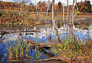 Gorgeous Prints - Autumn Morning at the Marsh Print by Marcia Colelli
