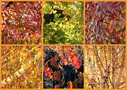 Colors Of Autumn Prints - Autumn Nature Collage Print by Carol Groenen