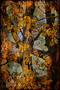 Blue Knob Prints - Autumn Oaks In Dance Mode Print by Lois Bryan