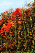 Fall Colors Autumn Colors Photo Posters - Autumn on a Hill I - Blue Ridge Mountains Poster by Dan Carmichael