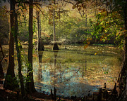 Terry Eve Tanner Framed Prints - Autumn on the Bayou Framed Print by Terry Eve Tanner