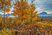 Grand Teton Posters - Autumn on the Range Poster by Joseph Rossbach
