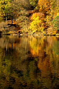 Golds Framed Prints - Autumn on Ullswater Framed Print by Linsey Williams