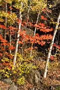 Autumn Or Fall Colors In The Green Mountains Of Vermont Print by Robert Ford