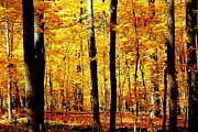 Rosanne Jordan Art - Autumn Orange by Rosanne Jordan
