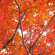 Autumn Orange Print by Scott Cameron
