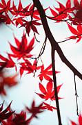 Jenny Rainbow - Autumn Painting in Japanese Style