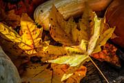 Pandyce McCluer - Autumn