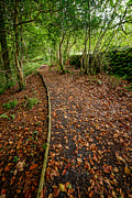 North Wales Digital Art - Autumn Path by Adrian Evans