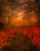Award Digital Art Framed Prints - Autumn Path Framed Print by Mac Titmus