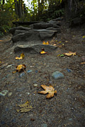 Path Photos - Autumn Path by Priya Ghose
