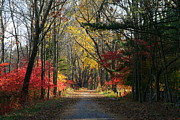 Neal Eslinger Framed Prints - Autumn Paths    No.2 Framed Print by Neal  Eslinger