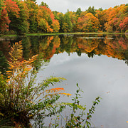 Calm Water Reflection Posters - Autumn Pond Poster by Bill  Wakeley