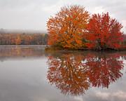 Autumn Tree Color Art - Autumn Pond by Patrick Downey