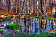Andy Lawless - Autumn pond reflections