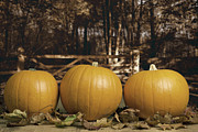Orange Pumpkins Prints - Autumn Pumpkins Print by Christopher and Amanda Elwell