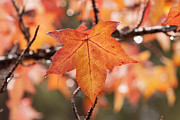 Turning Leaves Prints - Autumn Rain Print by Michelle Wrighton