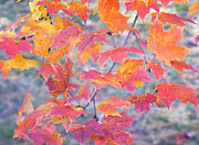 Healing Metal Prints - Autumn Rainbow Colors Metal Print by Irina Wardas