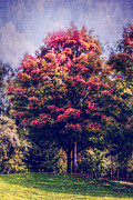 Autumn Rainbow Print by Melanie Lankford Photography