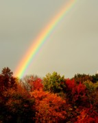 Purple Willow Posters - Autumn Rainbow Poster by Robert Harmon